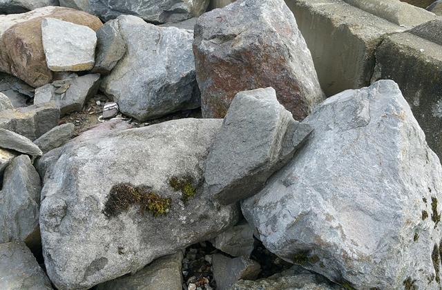 Huckleberry Basalt Landscape